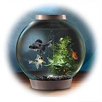 Baby Biorb Aquarium With Light and Filter