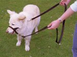 Halti Dog Training Lead Small Designed by Dr Roger Mugford