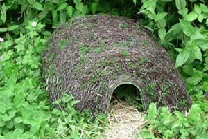 Hedgehog Mammal Habitats Hogitat Hedgehog Home