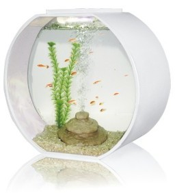 Deco O 20 Round Aquarium 20 Litre White From Pet Shopper