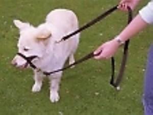 Halti Dog Training Lead Black Large