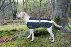 Flectalon Hi Viz Dog Coat Blue 40cm