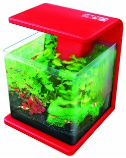 Superfish wave 15 red 15ltr nano fish tank from pet shopper for Best fish for nano tank