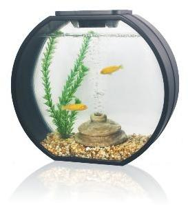Deco o mini round aquarium 10 litre black from pet shopper for Aquarium boule 20 litres
