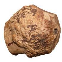 Anco Roots Large Dog Treat