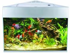 Fish R Fun Corner Tank Silver includes filter and lights