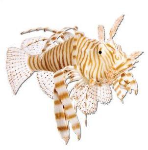 Lion Fish Brown 13cm