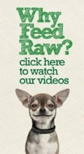 Raw Dog food videos