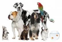various pets