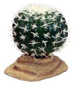 Komodo Barrel Cactus 9cm