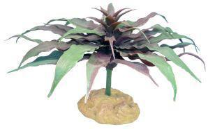 Komodo Star Cactus 13cm