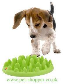 Northmate Green Mini Dog Feeder