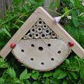 Wildlife World Bug Homes