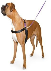 Ancol Happy At Heel Harness and DVD for Medium Dogs