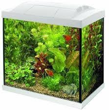 SuperFish Start 30 Tropical Kit White