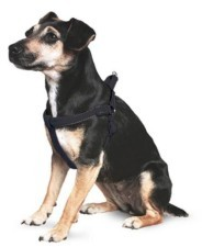 Ancol Padded Dog Harness Medium Black