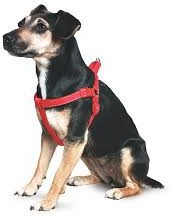 Ancol Padded Dog Harness Extra Small Red